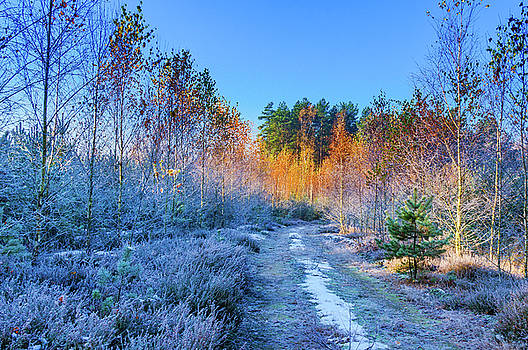 Autumn meets winter by Dmytro Korol
