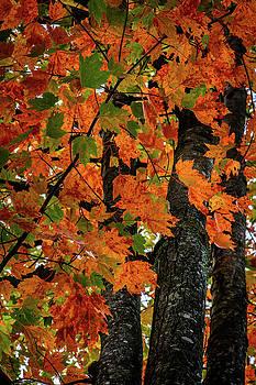 Autumn Memories by Gary Harris