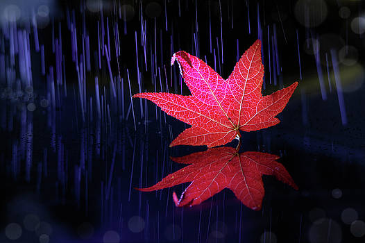 Autumn message by William Freebilly photography