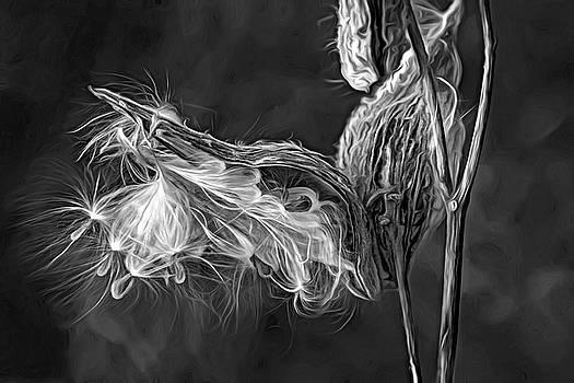 Autumn Milkweed 16 - Paint bw by Steve Harrington