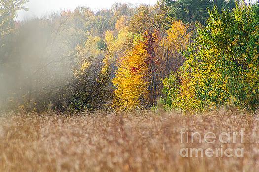 Autumn Mist by CJ Benson