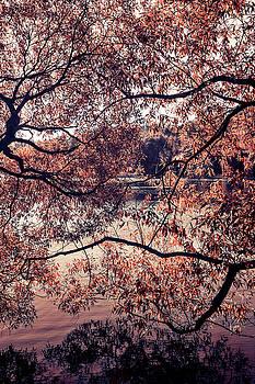 Jenny Rainbow - Autumn Mix. Airy Lace of Autumn