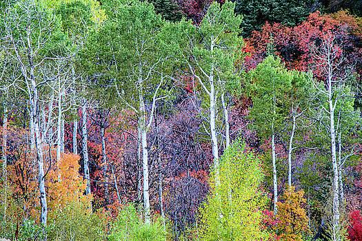 Autumn MIx by Bryan Carter