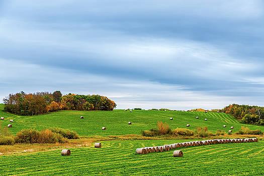 Autumn Mood by Nebojsa Novakovic