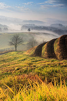 Autumn morning on hill by Davorin Mance