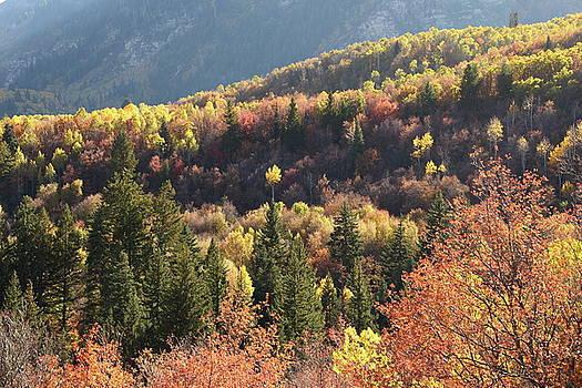 Autumn Mountain View by Jim Allsopp