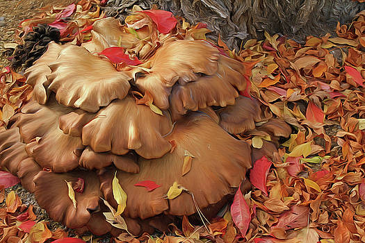 Autumn Mushrooms by Donna Kennedy