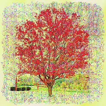 John M Bailey - Autumn Musings