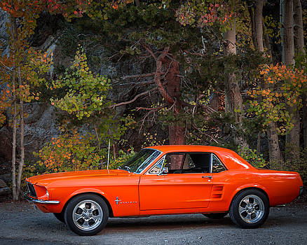 Autumn Mustang by Bert Dennison