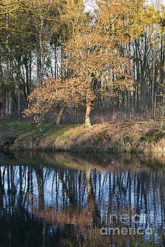 Compuinfoto  - autumn nature in holland