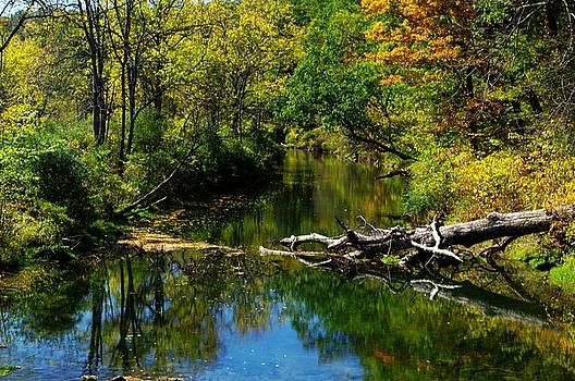 Autumn On Antes Creek by Stephanie Calhoun