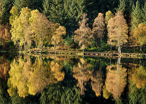 Autumn on Glencoe Lochan by Dave Bowman
