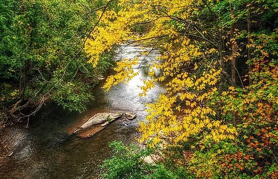 Autumn on Larry's Creek by Stephanie Calhoun