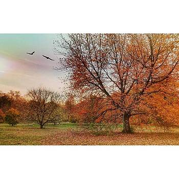 Autumn On Long Island #endofautumn by Visions Photography by LisaMarie