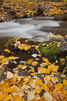Autumn on Mcgee Creek by Nolan Nitschke