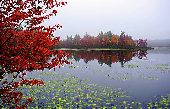 Autumn on the Bellamy by Wayne Marshall Chase
