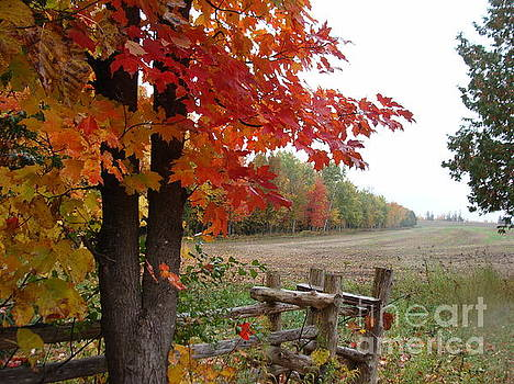 Autumn on the Farm by Beverly Livingstone