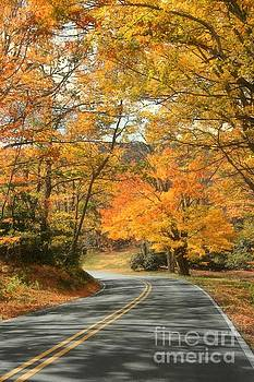 Autumn on the Parkway by Benanne Stiens