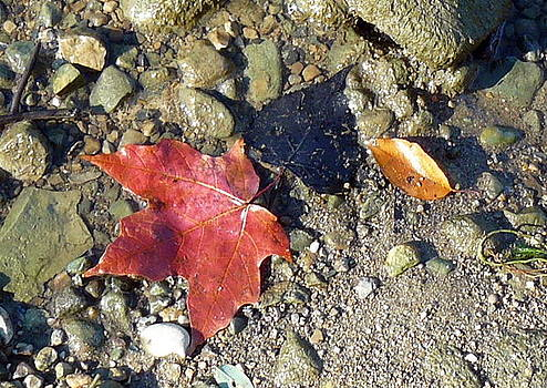 Autumn On The Shore by Susan Olga Linville