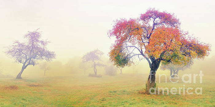 Autumn on Wagon Hill by Deena Athans
