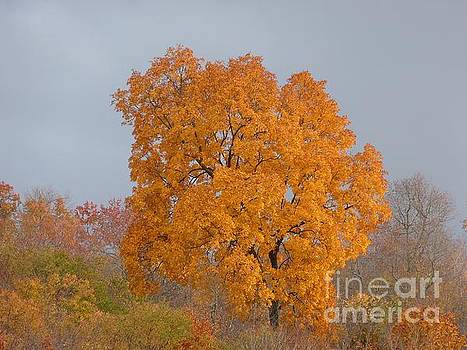 Autumn over Prettyboy by Donald C Morgan