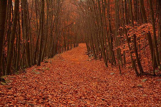 Autumn Passage by Raymond Salani III
