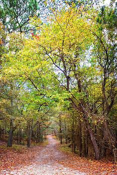 Autumn Path by Alan Raasch