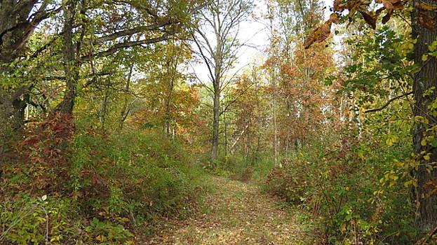 Autumn Path by Kimberly Mackowski