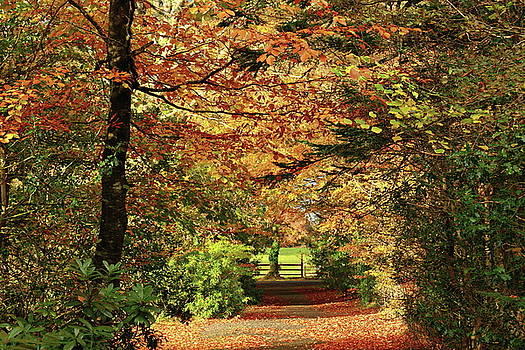 Autumn path by Peter Skelton