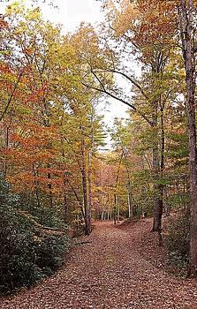 Joe Duket - Autumn Pathway