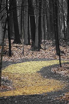 Autumn Pathway by Scott Heister