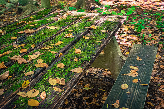 Autumn Picnic Table by Andrew Kazmierski
