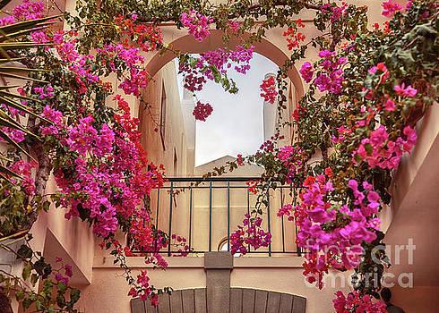 Ariadna De Raadt - autumn plants and garden in Portugal Algarve