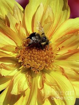 Autumn Pollenator by Putterhug Studio