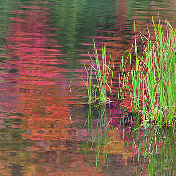 Autumn Pond Colors by Alan L Graham