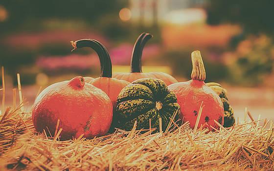 Autumn  Pumpkins by Pixabay