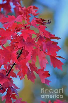Autumn Radiance by Deb Halloran