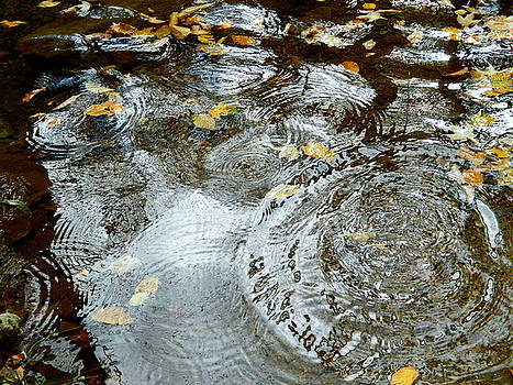 Arlane Crump - Autumn Rain Puddles