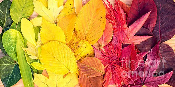 Delphimages Photo Creations - Autumn rainbow
