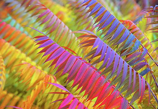 Jenny Rainbow - Autumn Rainbow of Leaves 1