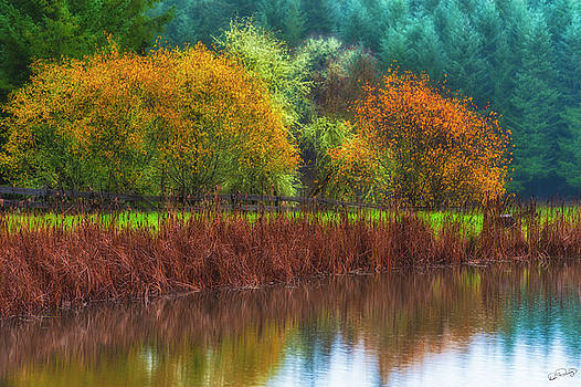 Autumn Raindrops on Pond by Dee Browning