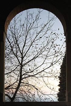 Autumn by Raluca Nedelcu