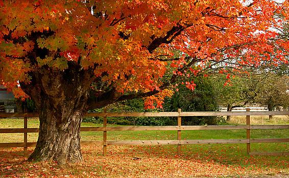 Barbara  White - Autumn Red