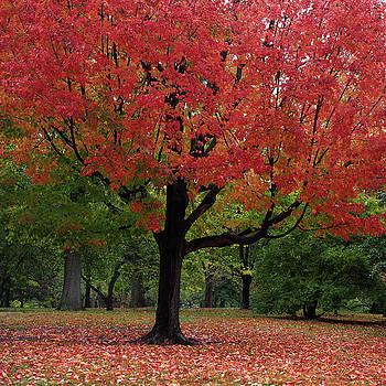 Autumn Red by Cornelis Verwaal