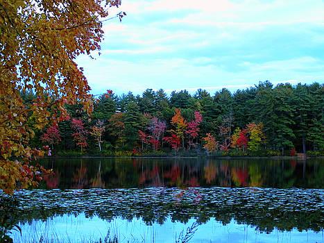 Autumn Reflection by Lynn Harrison