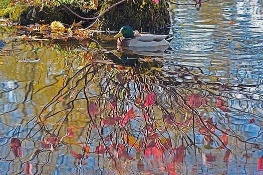 Autumn reflections by Asbed Iskedjian