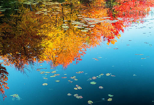 Autumn Reflections by John Roach