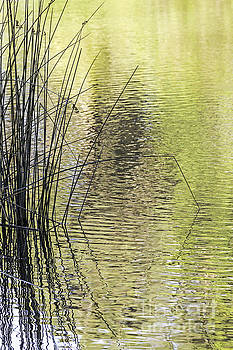 Autumn Reflections by Kate Brown