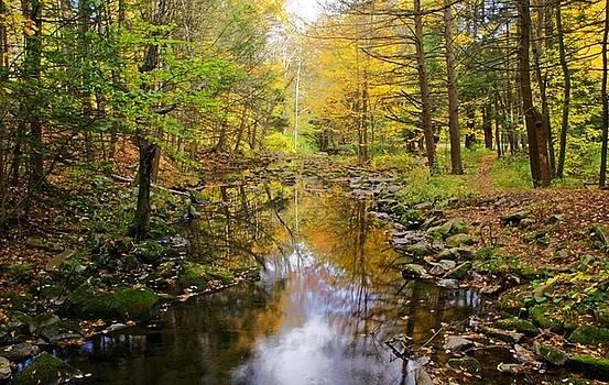 Autumn Reflections by Stephanie Calhoun