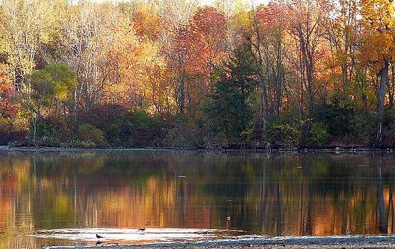 Autumn Reflections by Susan Olga Linville